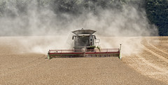 Eating up the wheat (David Feuerhelm) Tags: nikkor farm farming agriculture field crop harvest wheat combing harvester dust lexion