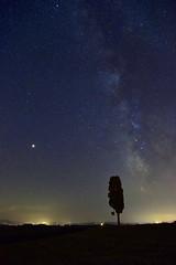 Milky way and a shooting star. (Antonio Cinotti ) Tags: toscana tuscany italy italia siena nikon nikond500 nikon1755 cypress cipresso vialattea shootingstar sky skyview stellacadente asciano cretesenesi