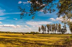 August meadows (kamilgalanek) Tags: meadows trees clouds sky poland