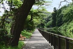 仙台 (briandodotseng59) Tags: asia taiwan roc jp japan color coth5 nikkor nikon frame street sun day light shadow night foreign east