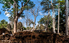 Many Trees that Invaded the Ta Prohm Temple, Cambodia-(4 photo merge) 51a (Yasu Torigoe) Tags: sony a99ii a99m2 sonyilca99m2 siemreap siem reap angkor archeological archeology park history ancient architecture temple religion religious buddhism buddhist buddha historical ta prohm taprohm jungle trees tree tombraider banyan tomb crypt laracroft lara croft suryavarman vishnu stonework buildings surreal sculpture structure deityroots landscape overgrown vines art theravada photograph photography dynamic travel asia cambodia southeast deity ruins khmer roots