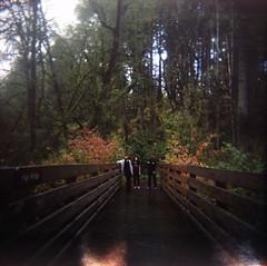 (a walk across the rooftops) Tags: tyroncreek forest northwest nw oregon woods green holga 120 film analog analogue fall ektar kodak