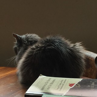 Still life with cat and book
