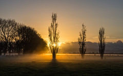 Sunrise on a misty morning (Kiwi-Steve) Tags: nz newzealand northisland waikato sunrise trees colour fog foggy mist misty nikon nikond7200 cloud
