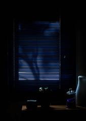 Japanse Art (Eduard van Bergen) Tags: window attic japanese sunscreen venetian blinds blue sunrise light shadow mime color colour garden house zolder vliering nature roof still picture photograph foto photo morning projection screen lamellen art