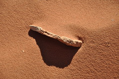 Wadi Rum (Kristian Lund Kofoed) Tags: jordan wadi rum desert camels