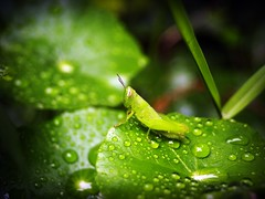 Water Drop On Leaf Stock Photos (www.icon0.com) Tags: leaf water green drop background natural nature fresh freshness wet droplets closeup close macro up wonderful vein life texture
