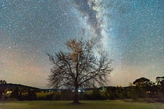The Milky Way and Winter Tree (Merrillie) Tags: nsw astronomy milkyway astrophotography australia nightsky gresford stars sky night newsouthwales astro glitter landscape winter rural paddock country tree astrology outside outdoors