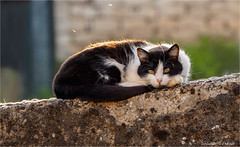 Oh, What a Busy Day! (Only Snatches) Tags: abend bourgogne burgund burgundy cat france frankreich katze mood natur sommer tiere animals evening friedlich nature peaceful season summer