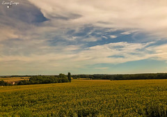 looking over the fields (lana.cumps) Tags: countryside fields maize amazingview amazing view bluesky clouds trees summer nature naturephotography naturebeauty naturelife naturelover naturepic beautyofnature beautifulnature belgium beautiful tree sky field grass green