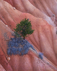Shape (Bereno DMD) Tags: tree color green red orange blue bryce canyon brycecanyon texture slope cliff hill midwest utah geology scene nature landscape nikon telephoto stack imagestack detail simple scenery pine vivid saturation 300 300mm