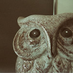 the stare of a ceramic owl thumbnail