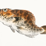 Muskellunge by Kōno Bairei (1844-1895). Digitally enhanced from our own original 1913 edition of Barei Gakan. thumbnail