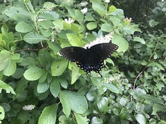 IMG_6707 (Kerry Wixted) Tags: jug bay wetlands sanctuary invasive plant class trip july 2018 natural history field studies anne arundel county md maryland