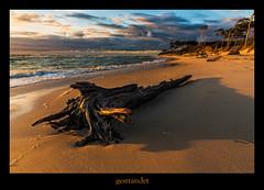 Weststrand (Rukiber) Tags: ostsee dars fischland natur mecklenburgvorpommern meer nikon d750 christian kirsch rukiber urlaub reisen sonnenuntergang sunset