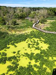 Galien River County Park (kevin dooley) Tags: galien galienriver newbuffalo marsh
