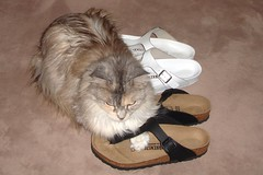 Vicky . These new shoes are mine! -in explore- (Uhlenhorst) Tags: 2018 germany deutschland bavaria bayern animals tiere
