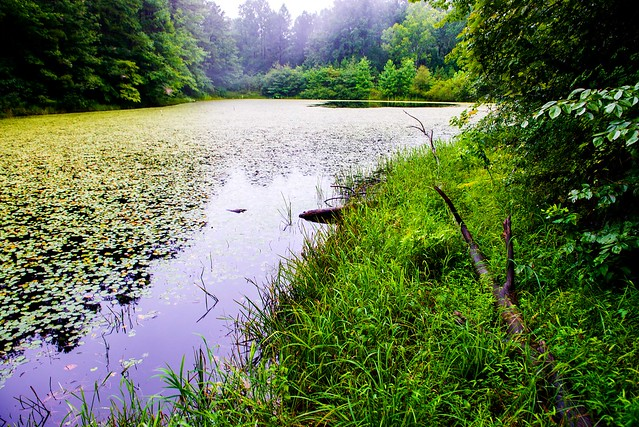 Hoosier National Forest - Blackwell Pond - July 31, 2018