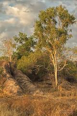 Rocky Shelf (Peedie68) Tags: nt australia northernterritory maryrivernationalpark sandstone rock sunrise grass