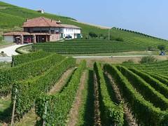 Autour de Barolo... (Portocéan) Tags: italie italia turin torino barolo piémont lacmajeur lagomaggiore langhe