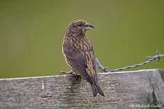 Crociere _003 (Rolando CRINITI) Tags: crociere uccelli uccello birds ornitologia montebaldo natura