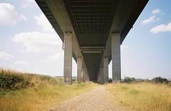 Under the M5, on the Pill side (knautia) Tags: m5 motorway pill northsomerset england uk august 2018 underthebridge underthem5 bridge film ishootfilm olympus xa2 olympusxa2 nxa2roll53 heatwave 160iso kodak portra