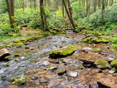 Forest Creek (Dave_Bradley) Tags: pennsylvania usa outdoor nature woods flowing