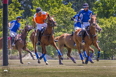 Polo Match #3 (allentimothy1947) Tags: california places sonomacounty ball field goal grass horse lawn mallet oakmont polo rider sports hit pacific united saddle santa rosa sonoma county stregis clubs drive hats jersey uniforms whip