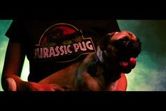 Indominus Pug (JB Photato) Tags: jurassicpark jurassicworld jurassicworldfallenkingdom humor funny pug