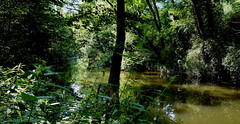 Germany, Remstal bei Neckarrems, 76456/10456 (roba66) Tags: wasser see river fluss rems neckarrems germany deutschland flusslandschaft roba66 landschaft landscape paisaje nature natur naturalezza baum tree water leau
