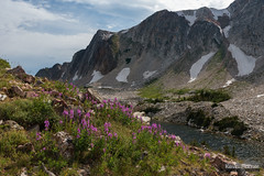 Snowy Fireweed (kevin-palmer) Tags: snowyrange medicinebownationalforest wyoming mountains summer july afternoon nikond750 tamron2470mmf28 water green grass lookoutlake fireweed flowers wildflowers pink colorful clouds