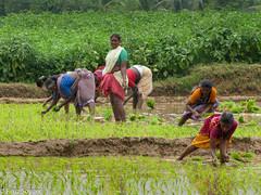 IMG_7212 (Firuz Soyuer) Tags: india incredibleindia bharat thekkady kerala tamilnadu