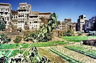 Sana'a urban agriculture