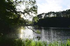 五色沼 (briandodotseng59) Tags: asia japan taiwan color coth5 digital nikon nikkor street world travel sun day light old nature landscape sunset green water