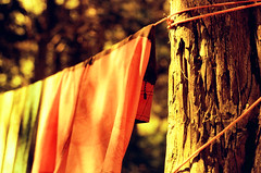 hung to dry (.grux.) Tags: pentaxlx smc55mmf18 film redscale svemacolor125 25 expiredfilm tree rope clothesline drying shorts towels camping campsite makeshift summer thepinery provincialpark ontario