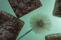 A hint of green (mvnfotos) Tags: flor flower macrofriday cubes sugar