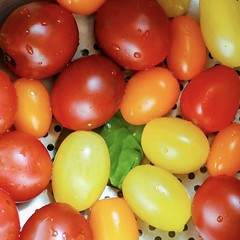 Tomato's (Plump Panda Photography) Tags: cooking food water tomato 1740 6d canon