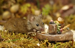 wild garden mouse with table (4) (Simon Dell Photography) Tags: house mouse log pile nature wildlife animal rodent cute funny george simon dell photography sheffield uk old english garden summer flowers fantasy home coconut door table food