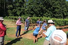 IMG_9116 (UGA CAES/Extension) Tags: vineyard wine winery stonepilevineyard viticulture viticultureteam northgeorgia winecountry ugacooperativeextension uga extension grapes ugaextension cainhickey
