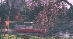 Comes A Time (larisalyn (Rachel)) Tags: deer nature water neilyoung animal tree lake grass flowers secondlife sky cabin home chill bambi bambismum britishcolumbia
