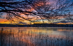 Sunset colours (jurgita_zuk) Tags: sunset sunsetcolours saulelydis medis spalvos colours ezeras lake evening vakaras beautiful svedija sweden