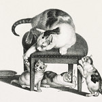 Illustration of domestic cats by Gottfried Mind (1768-1814). Original from Library of Congress. Digitally enhanced by rawpixel. thumbnail