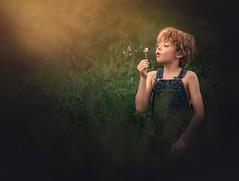 Dreamer ({jessica drossin}) Tags: jessicadrossin boy child dream wish portrait dandelion wwwjessicadrossincom