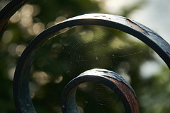 Concentric (luxaeternum) Tags: a6500 zeiss fence nature bokeh