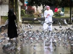 Pigeons in London, England (Vincent Christiaan Alblas) Tags: london england unitedkingdom capital capitals vincentalblas urban europe verenigdkoninkrijk grootbrittanie londen bird pigeons pigeon