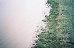 The edge of the Avon (knautia) Tags: pillforeshore riveravon m5 motorway bridge pill northsomerset england uk august 2018 ishootfilm olympus xa2 olympusxa2 nxa2roll54 heatwave river avon naturereserve cyclepath nationalcyclingnetwork 160iso kodak portra