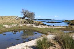 IMG_9201 (christineNZ2017) Tags: ambury regional park amburypark birdsanctuary birdlife bird sanctuary southauckland auckland newzealand winter