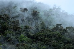 Anchicayá (Wildlife and nature - Colombia) Tags: anchicaya colombia valle landscape fog