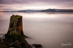 LONE STUMP (Cor Lems) Tags: point landscape newzealand water sunrise lakerotorua sulphur landscapes geothermal lake rotorua