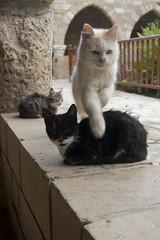 Chypre-1508 (Yves GABRIEL) Tags: aux chats chypre chypre1508jpg couvent couventauxchats gabriel yves yvesgabriel